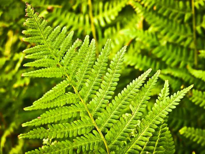 fern-nature-green-plant.jpg